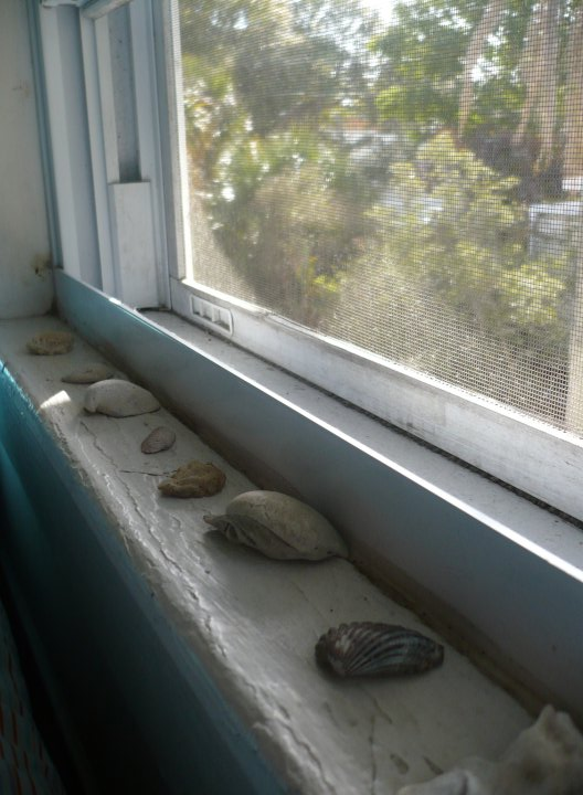 Honest caption: These are the seashells along my bedroom windowsill, where I spend most of my time! I have nice roommates but my tour mate is trying to get me fired and harasses in the afternoon. Apparently she thinks I'm racist, which makes no sense whatsoever! Hooray! What a fun sexy time this all is!